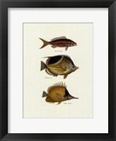 Framed Tropical Fish