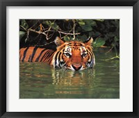 Framed Tiger - water