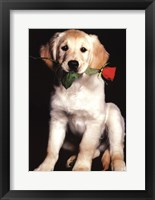 Framed Dog and Rose