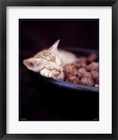Framed Kitten Sleeping in Bowl