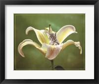 Framed Kitten And Flower