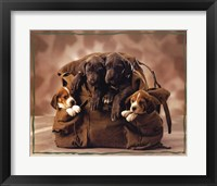 Framed Puppies