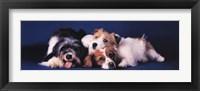 Framed Dogs Cuddling