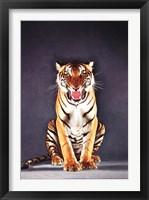 Framed Tiger - gray