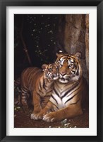 Framed Tiger With Cub