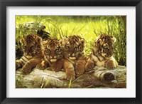 Framed Baby Tiger