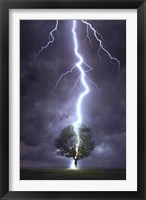 Framed Lightning Striking a Tree