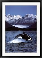 Framed Orca