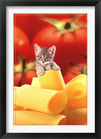 Framed Kitten On Pasta