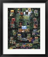 Framed Tropical Rain Forest movie poster