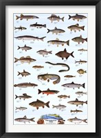 Framed Freshwater Fish