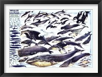 Framed Whales and Dolphin