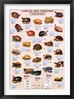 Framed Turtles And Tortoises