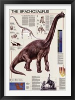 Framed Brachiosaurus