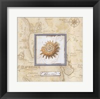 Sea Treasure III Framed Print