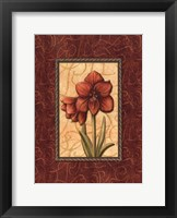 Red Passion IV Framed Print