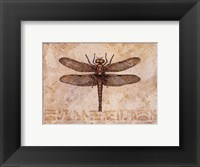 Framed Dragonfly III