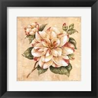 Framed Camellia