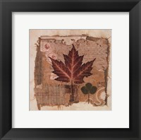 Maple Framed Print