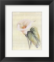 Framed Calla Lily II