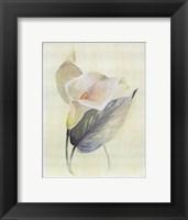 Framed Calla Lily III