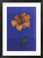 Flower on Blue Framed Print