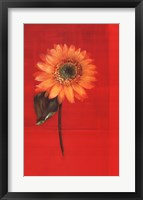 Flower on Red Framed Print