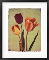 Concerto Verde I Framed Print