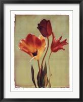 Concerto Verde II Framed Print