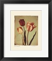 Framed Spring Color II