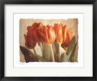 Bellezza II Framed Print