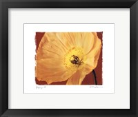 Poppy II Framed Print