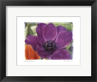 Framed Purple Anemones I