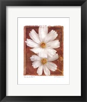 Cosmos on Red II Framed Print