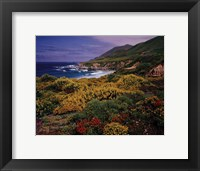 Framed Yellow Lupine