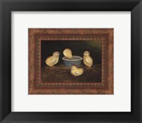 Chicks with Water Framed Print
