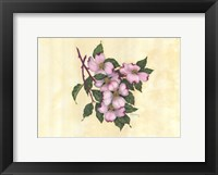 Framed Spring Dogwood I
