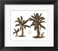 Tropical Fruits II Framed Print