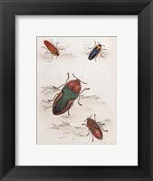 Chelsea Beetles-1 of 3 Framed Print