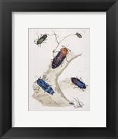 Framed Chelsea Beetles-2 of 3