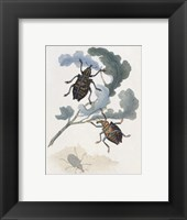 Chelsea Beetles-3 of 3 Framed Print