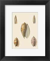 Framed Shells-4 of 8
