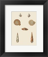Framed Shells-6 of 8
