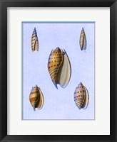 Framed Shells-2 of 4