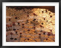 Framed Lotus Pond