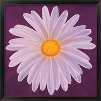 Framed Daisy 9-3