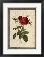 Framed Grandiflora I