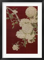 Butterfly and Hydrangea II Framed Print