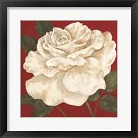 Framed Rosa Blanca Grande II