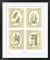 Framed Four Fancy Ferns